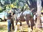Horse at the Horn Fair